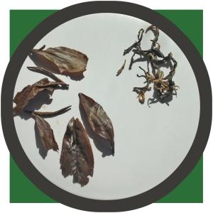 Whole Golden Safari Tea Leaves