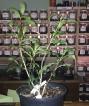 Tea plants as props? Thanks, #TeaAcrossAmerica!